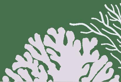 coral-min